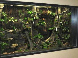 Coasta Rican Poison Dart Frog Exhibit