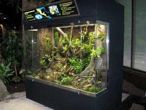 Golden Frog Habitat