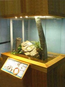 California King Snake Habitat