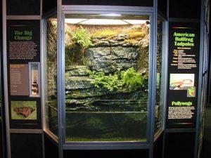 Tadpole Habitat